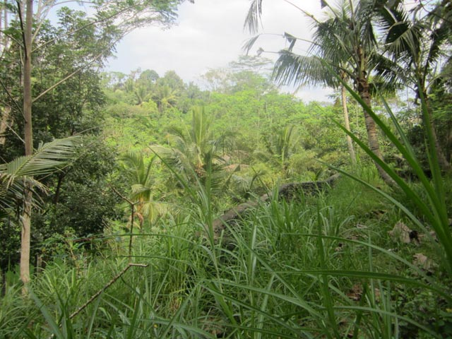 Land for sale in Ubud, Bali.