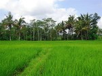 Land for sale in Ubud and Gianyar, Bali